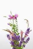 Dzicy kwiaty, wyka, korony wyka i kiciasta wyka, Fotografia Stock