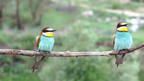 Dzicy piękni ptaki siedzą i latają zdala od gałąź zbiory