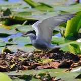 Dzicy ptaki siedzi na gniazdeczku Obrazy Royalty Free