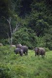 Dzicy słonie żyją w głębokim lesie, Tajlandia Fotografia Royalty Free