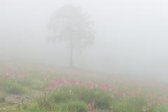 Dzicy Siam tulipany kwitnie pole Obraz Royalty Free
