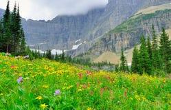 Dzicy wysokogórscy kwiaty na lodowa parka narodowego krajobrazie Obraz Stock