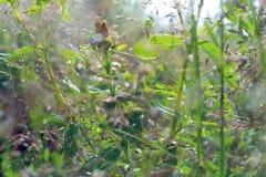 Dzicy ziele w polu Fotografia Royalty Free