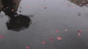 dzień deszcz zbiory wideo