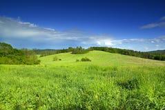 dzień do sunny łąki zdjęcie royalty free