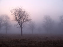 dzień dobry mgła. Zdjęcie Royalty Free