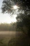 dzień dobry mgławy zdjęcie royalty free
