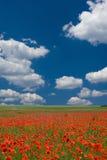 dzień dobry wiosna obrazy royalty free