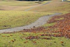 dzień jesieni ziemia zostaw sunny zdjęcia royalty free