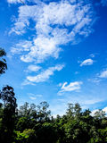 dzień lasu krajobraz pogodny Obrazy Royalty Free