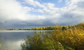 dzień lasu krajobraz pogodny Jezioro, trzcina, drzewa i dramatyczny chmurny niebo, Jesień spokojny dzień na jeziorze obrazy royalty free