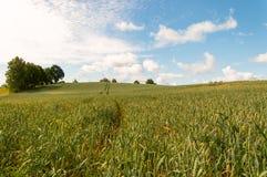 dzień lata gorąca pola pszenicy Obraz Stock