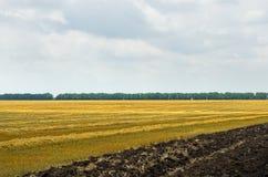 dzień lata gorąca pola pszenicy zboża żniwo na rolniczym polu agrarny sektor produkcja Zdjęcie Stock