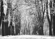 dzień marznąca parka śniegu drzew zima Obrazy Stock