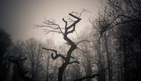 dzień mgła Zdjęcie Stock