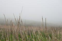 dzień mgła Fotografia Stock