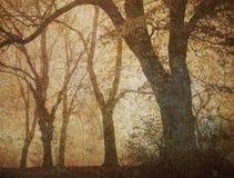 dzień mgłowy wymarzony obrazy stock