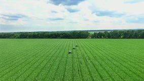 dzień motyliego trawy sunny swallowtail lata niebieskie niebo z białymi chmurami, powietrzny wideo rolnictwo ciągniki pracują na  zdjęcie wideo