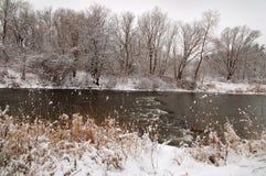 dzień mrozowa Styczeń natury parka śnieżna drzew zima Fotografia Royalty Free