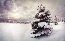 dzień mrozowa Styczeń natury parka śnieżna drzew zima Fotografia Stock