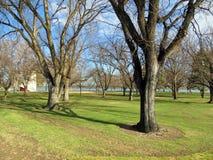 dzień mrozowa Styczeń natury parka śnieżna drzew zima Zdjęcie Stock