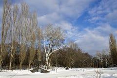 dzień mrozowa Styczeń natury parka śnieżna drzew zima Obraz Stock