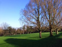 dzień mrozowa Styczeń natury parka śnieżna drzew zima Obrazy Royalty Free