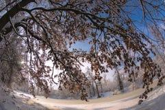 dzień mrozowa Styczeń natury parka śnieżna drzew zima Drzewo zakrywający z śniegiem obok zamarzniętego stawu Fotografia Royalty Free