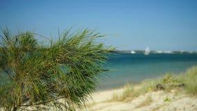 dzień na plaży sunny zbiory wideo