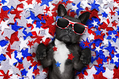 Dzień Niepodległości 4th Lipa pies Obraz Royalty Free
