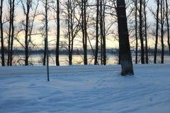 dzień piękna zima Śnieg na drodze Śnieżna aleja śnieżni drzewa Obrazy Stock