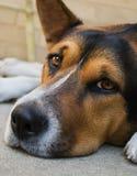 dzień pies zdjęcie stock