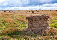 dzień pola krajobraz broguje pogodnego Obraz Stock