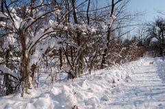 dzień słońca zima obraz stock