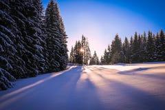 dzień ziemi zamarzania spoczywa śnieżną zimy drzew Zdjęcia Royalty Free