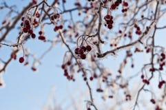 dzień zimna zima Zdjęcie Stock