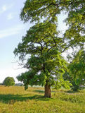 dzień czarodziejski lato drzewo Obraz Royalty Free