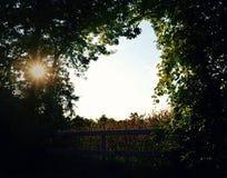 Dzień dobry kukurudza Fotografia Stock