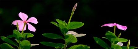 dzień dobry kwiatów Obrazy Royalty Free