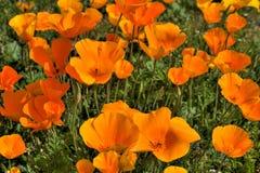 dzień dobry kwiatów Obraz Royalty Free