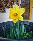 dzień dobry wiosna Obraz Stock