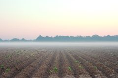 dzień dobry z gospodarstw rolnych obrazy stock
