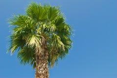 dzień drzewo palmowy pogodny Obraz Stock
