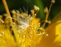 Dzień kwiat Fotografia Royalty Free