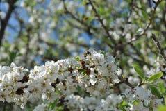 dzień lasowej wiosna podmiejski spacer Fotografia Stock