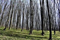 dzień lasu krajobraz pogodny Zdjęcie Royalty Free