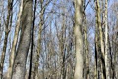 dzień lasu krajobraz pogodny Zdjęcia Stock