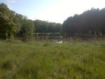 dzień lasu krajobraz pogodny Obraz Royalty Free