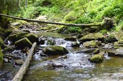 dzień lasu krajobraz pogodny Zdjęcie Stock
