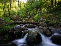 dzień lasu krajobraz pogodny Obrazy Stock